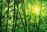 Fotomural Bambu Idealdecor